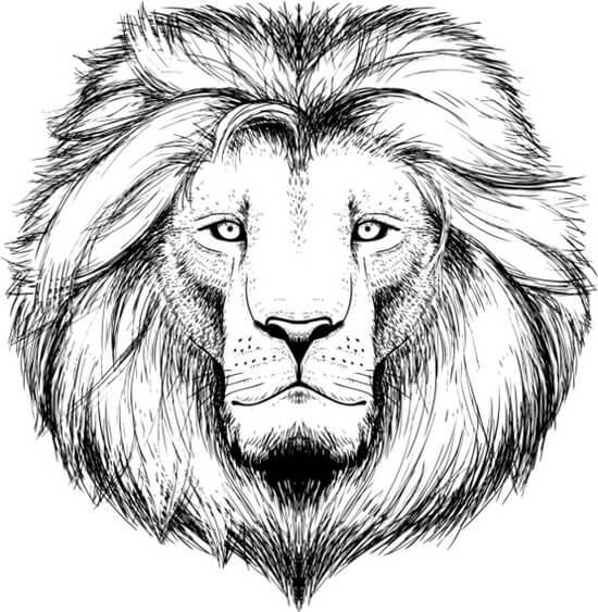 lion tattoo designs the body is a canvas. Black Bedroom Furniture Sets. Home Design Ideas