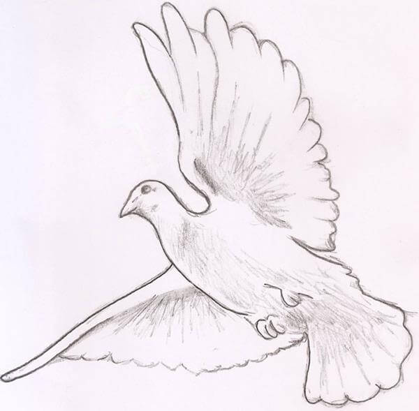 Line Drawing Dove : Dove tattoo designs the body is a canvas