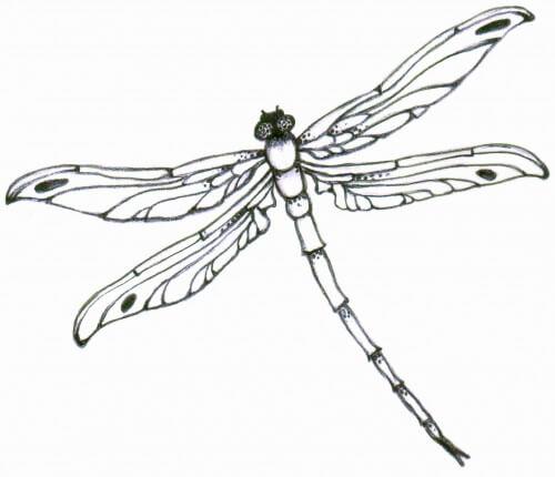 Dragonfly Tattoo Design See More Designs On Httpthebodyisacanvas
