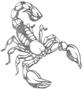 Scorpion Tattoo Design - see more designs on https://thebodyisacanvas.com