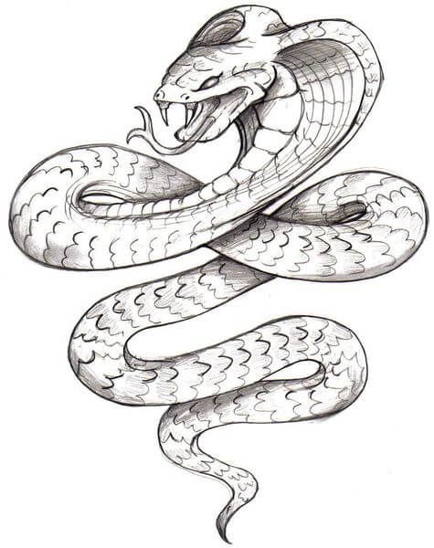 Drawing Lines In Asp : Snake tattoo designs the body is a canvas