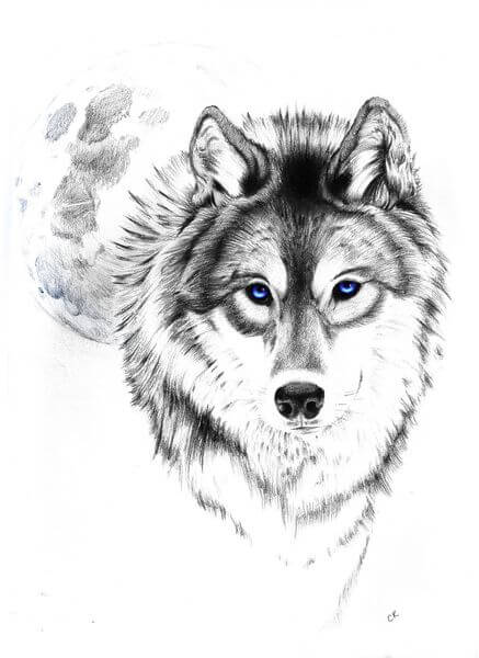 Wolf Tattoo Designs The Body Is A Canvas